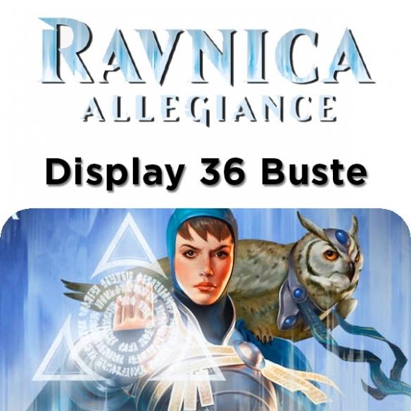 Ravnica Allegiance - Display 36 Buste (ENG) Box di Espansione